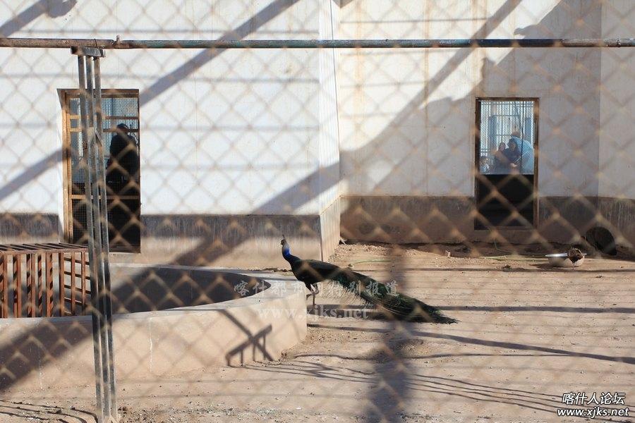 喀什市动物园-喀什本地通-喀什都市网