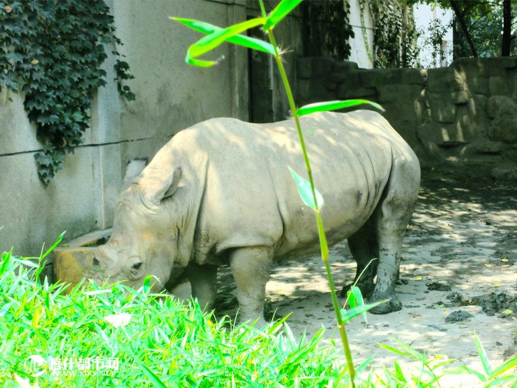 逍遥游-成都动物园-旅游户外-喀什都市网